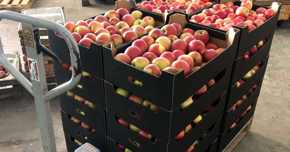 Тем временем цены на яблоки в Польше в четыре раза выше, чем в прошлом году